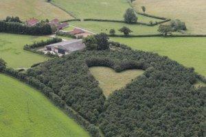 Heart shaped field