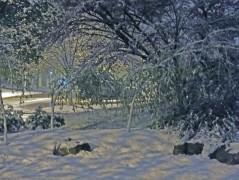 BD snow 2013 2