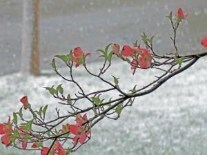BD snow 2013 tree