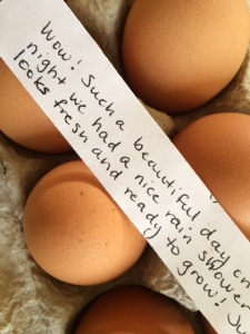 eggs hen house