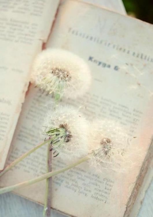 book dandelions